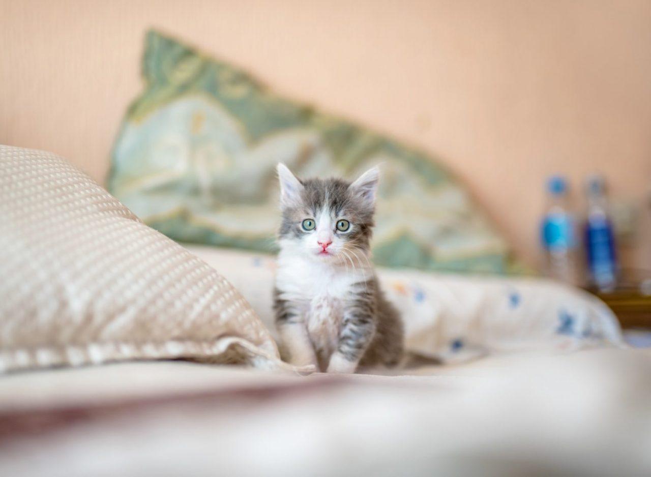 how to calm down kitten when hyper