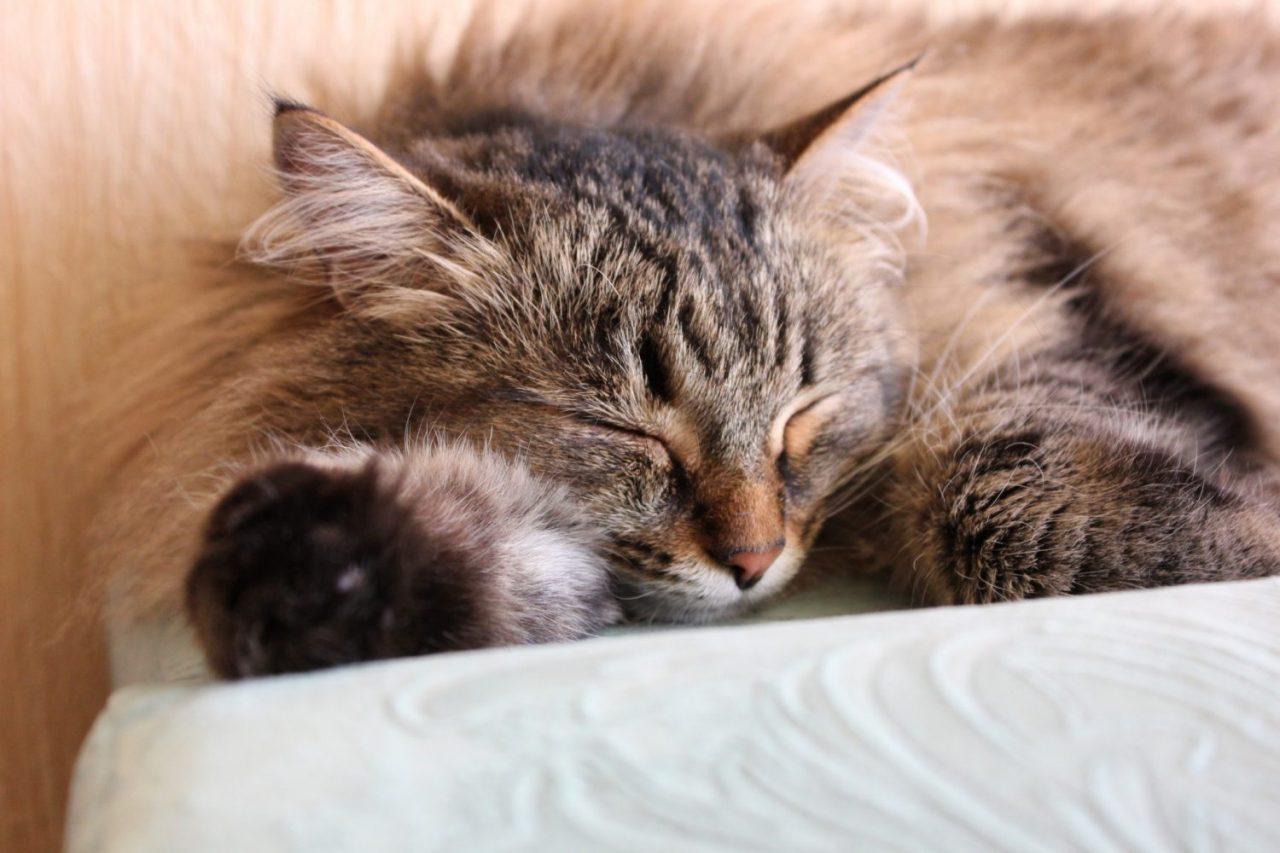 do kittens sleep through the night