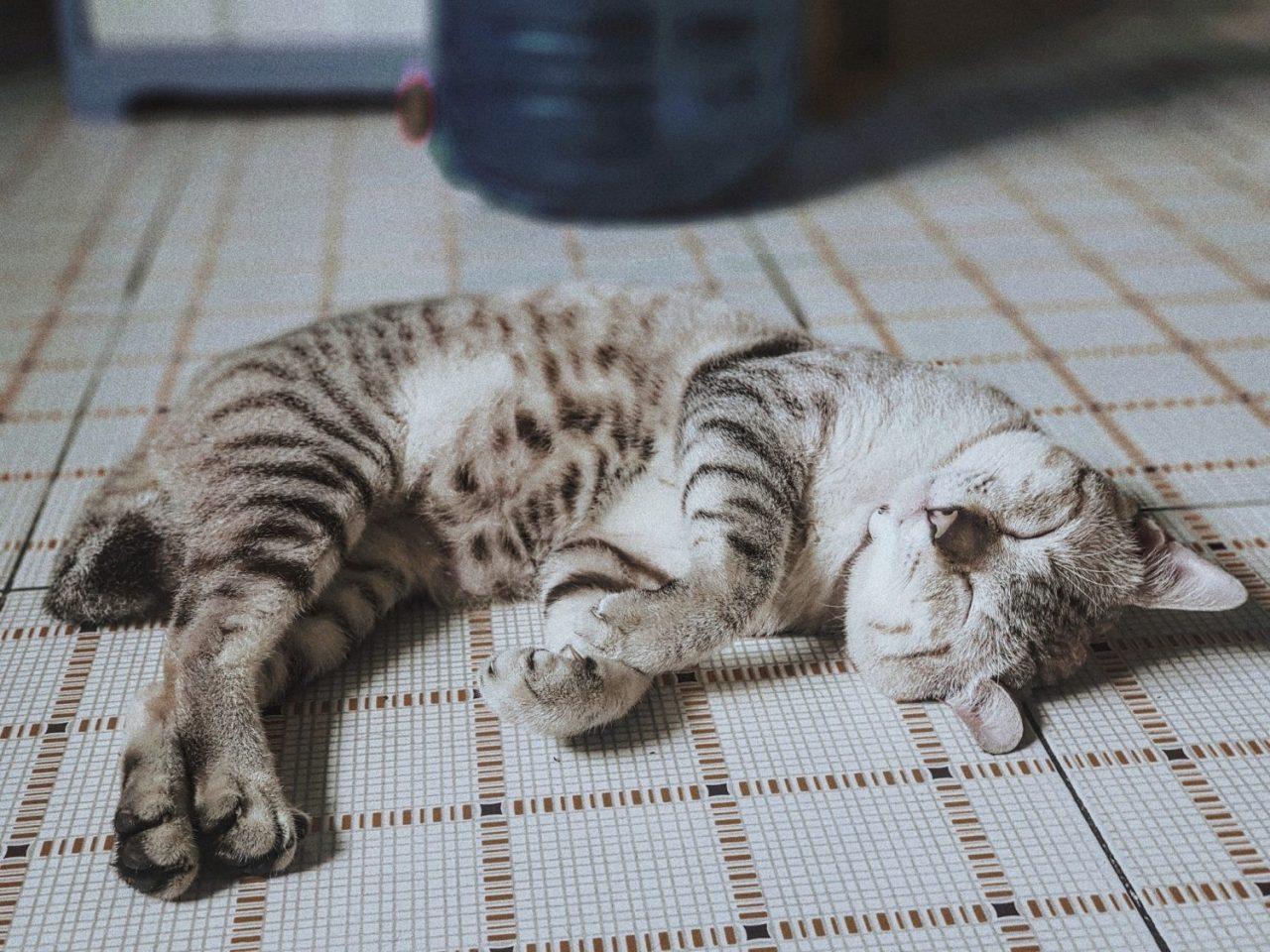 how to calm down a kitten when hyper